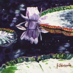 Water Lily Reflection by artist Jenny Floravita