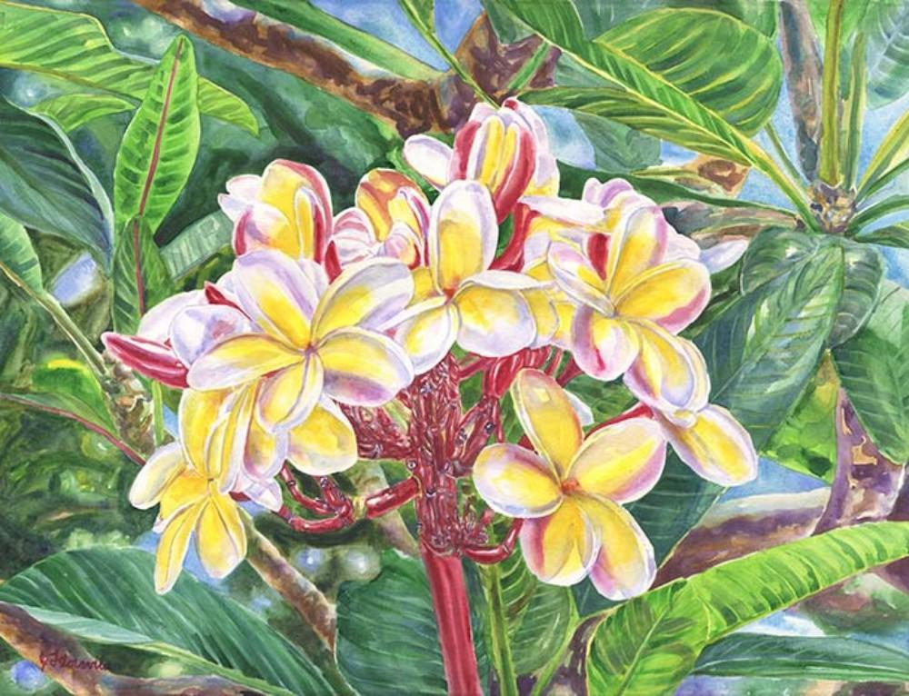 Summertime Kauai Island Plumeria watercolor painting