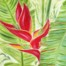 Island Red Maui Flower oil Painting